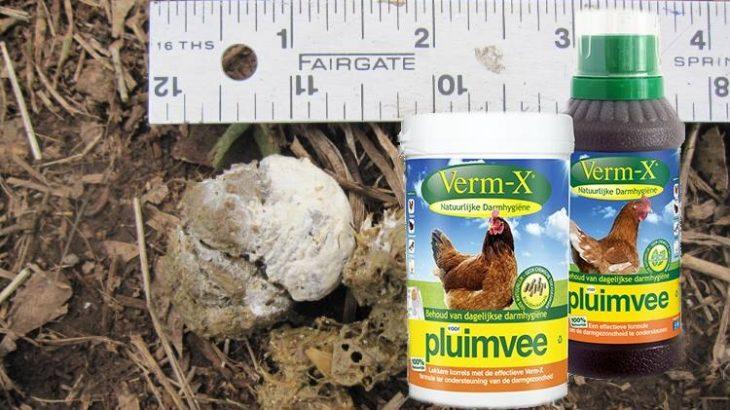 kippen ontwormen met verm-x